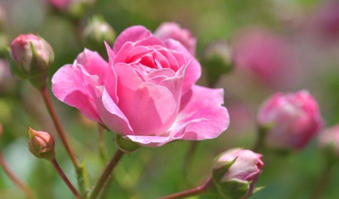 Gardening Calendar: What to Plant in December