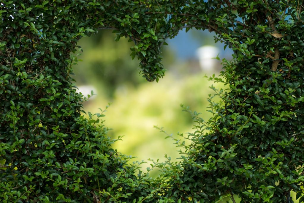 heart shape in hedge