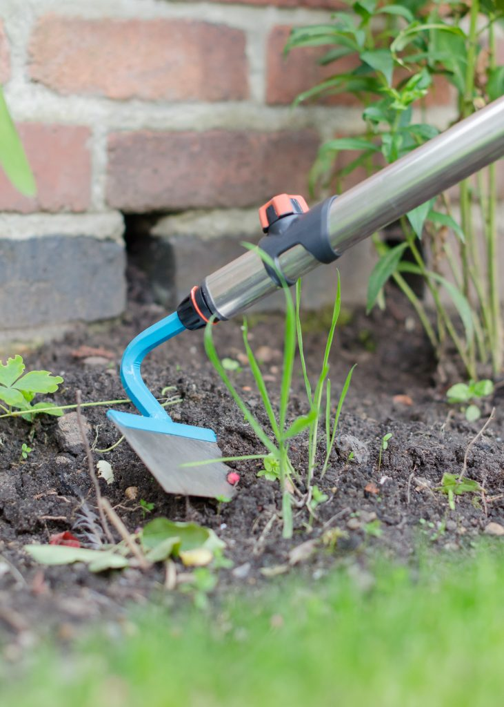 autumn gardening tips - removing weeds