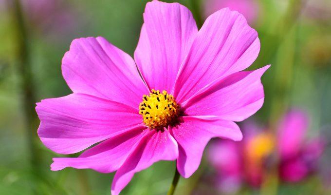 Top 10 beautiful low-maintenance flowering plants