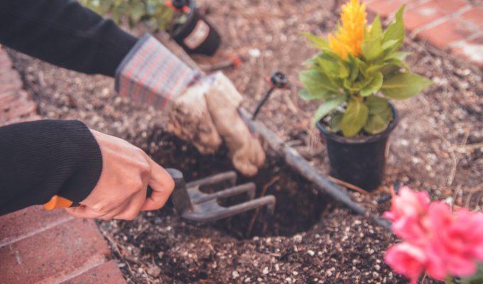 Six easy tips for garden tool maintenance