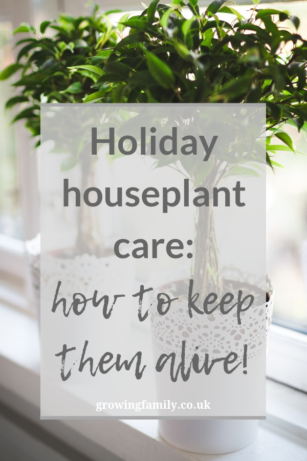 Going on holiday? Check out these houseplant care tips for keeping your indoor plants alive and happy while you're away!