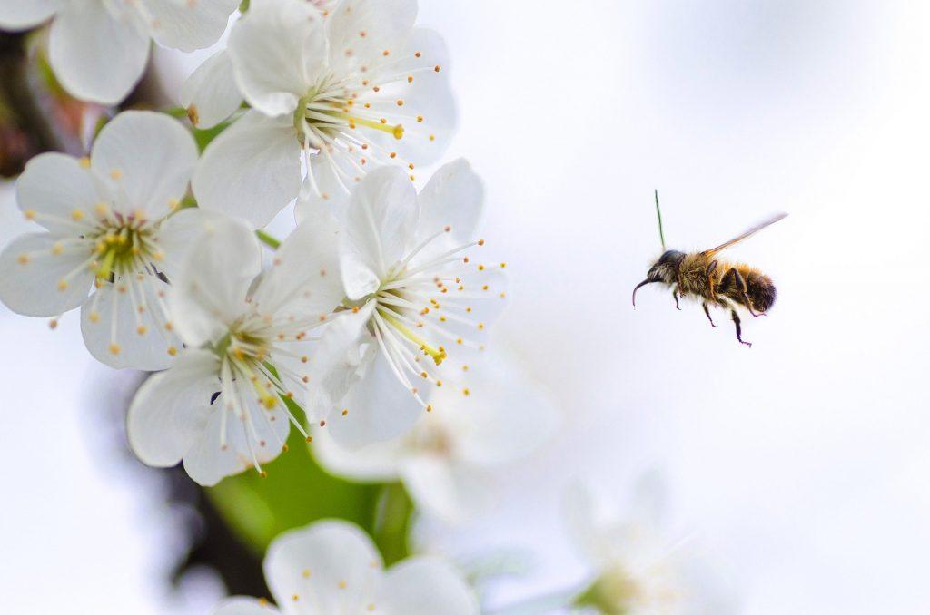 bee garden hawthorn flowers for bees