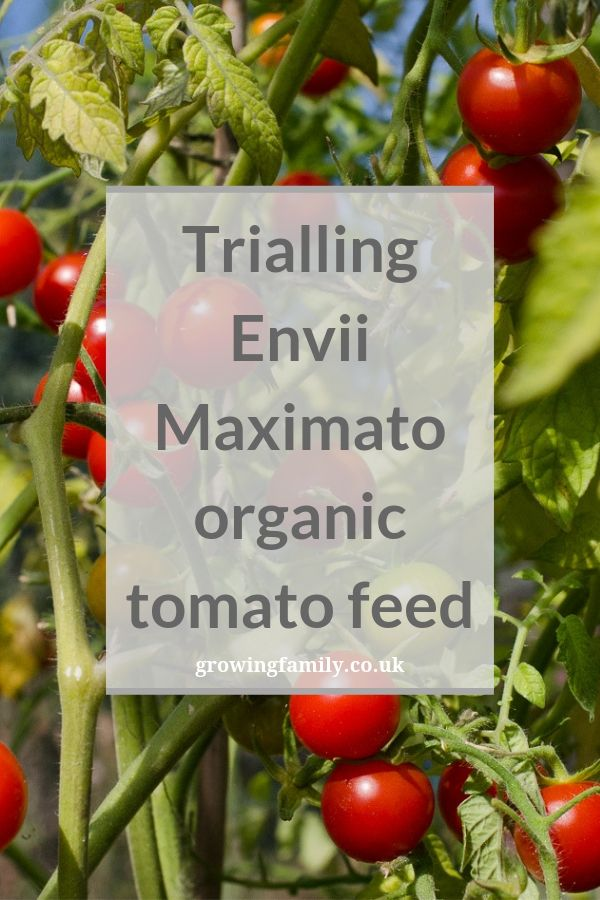 Trialling Envii's Maximato organic tomato feed, which claims to encourage strong growth and increase crop yield of up to 50% - check out our results!