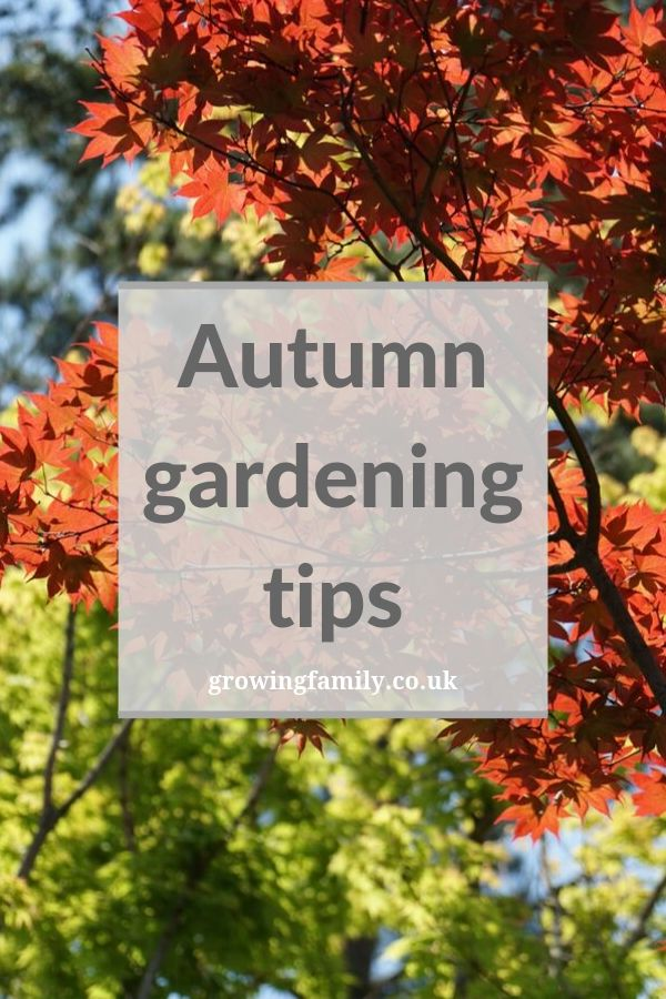 If you'd like your garden to flourish year round, here are some quick autumn gardening tips that will help to get it in good shape.