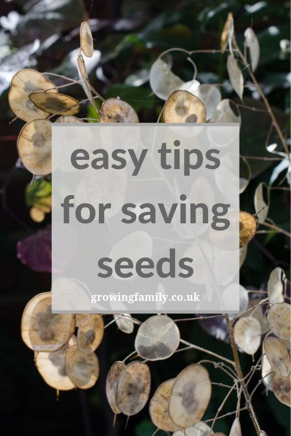 Harvesting seeds is a great way to get new plants for free, and it's really easy! Here's how to save seeds, and which plants to collect seeds from in autumn.