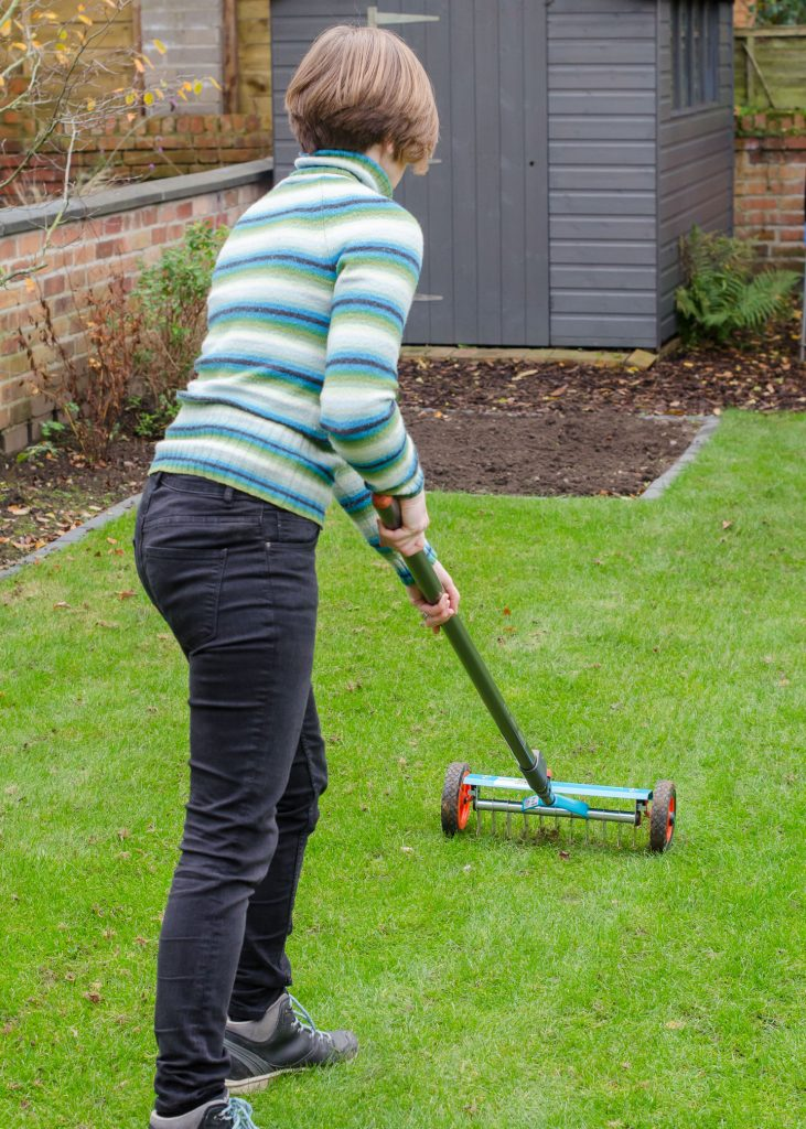 autumn garden maintenance - removing thatch from lawn