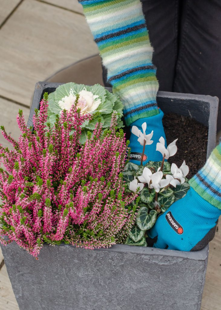 garden maintenance ideas - planting a winter container