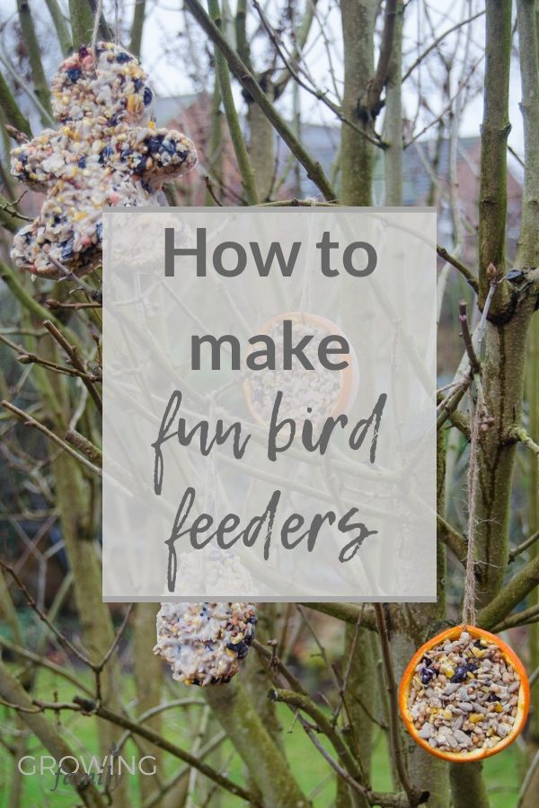 Encourage wild birds to visit your garden with homemade bird feeders - easy to make, fun for kids, and loved by birds! Includes step-by-step instructions.