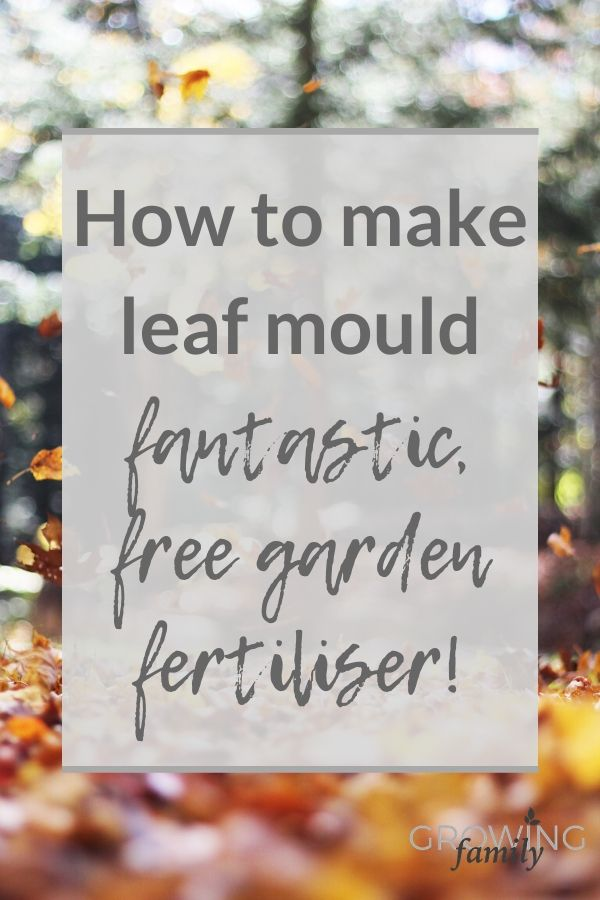 Easy step-by-step instructions on how to make leaf mould - a fantastic, free garden soil conditioner. Plus advice on the best leaves for making leaf mould.