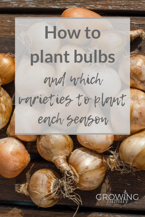 Flower bulbs are brilliant for creating wow factor in your garden; this easy step-by-step guide explains how to plant bulbs for a stunning low cost display.