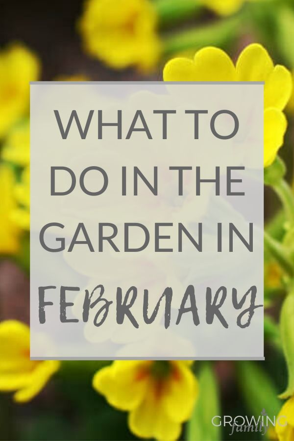 Only got 10 minutes to spare for gardening? These ideas and tips for quick gardening in February will help you focus and prepare your garden for spring.