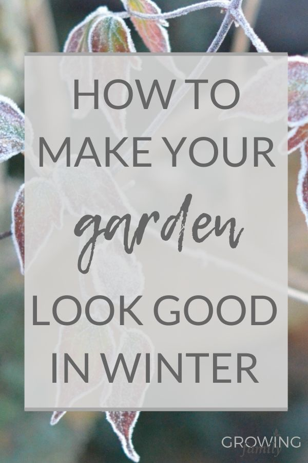 Low-effort tips and ideas for making your winter garden look good. Easy ways to provide maximum interest during the colder months!