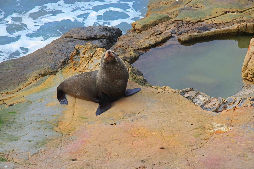 seal on beach in new zealand