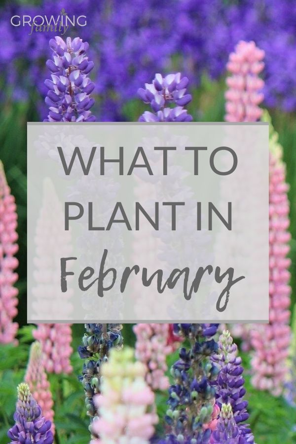 You don't have to wait for spring to grow new plants! Here are my top picks for what to plant in February, including, flowers, vegetables and bulbs.