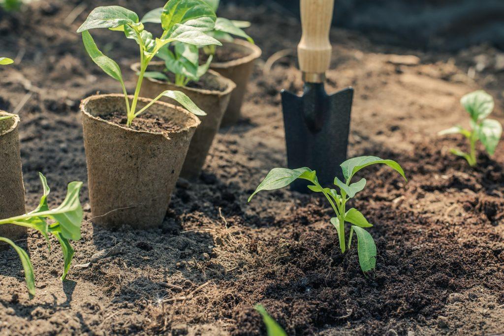 garden plants in pots