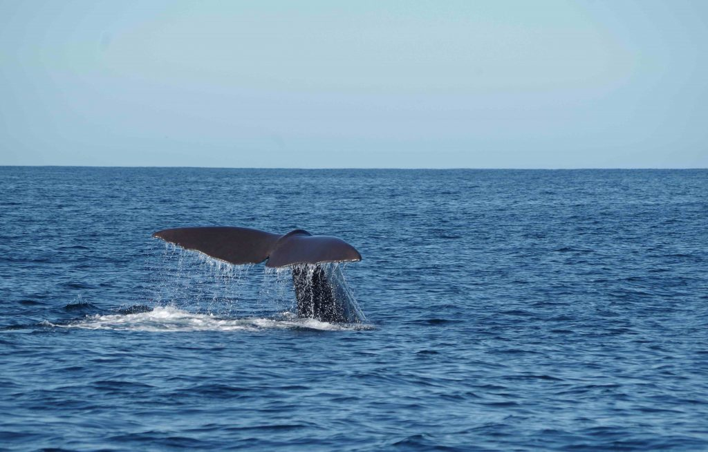 new zealand road trip bucket list - whale watching at kaikoura
