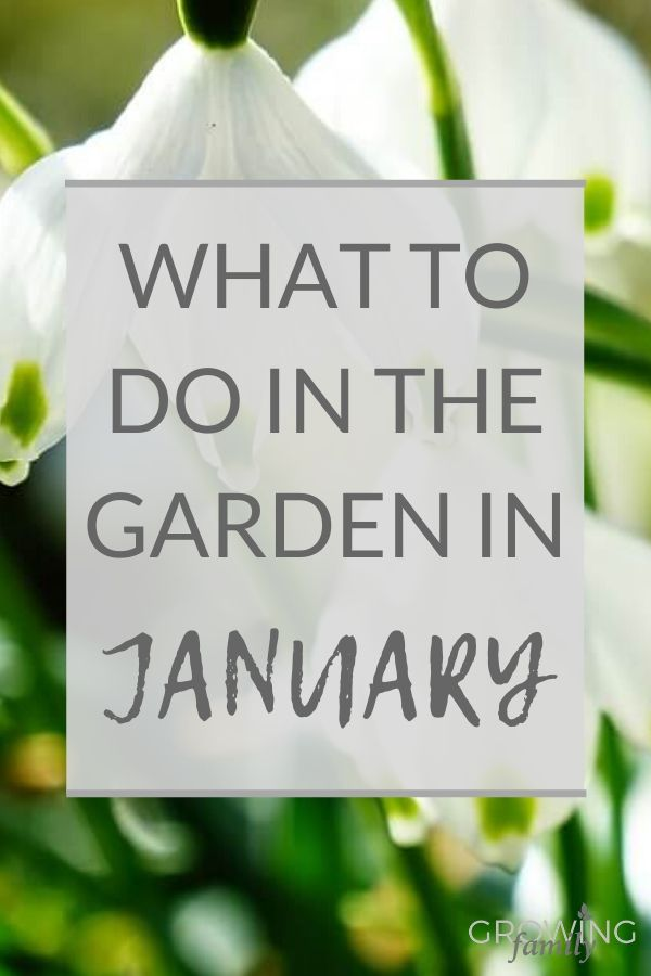 Only got 10 minutes to spare for gardening? These ideas and tips for quick gardening in January will help you focus and prepare your garden for spring.