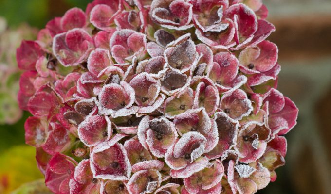 Tips for protecting plants from frost and cold weather