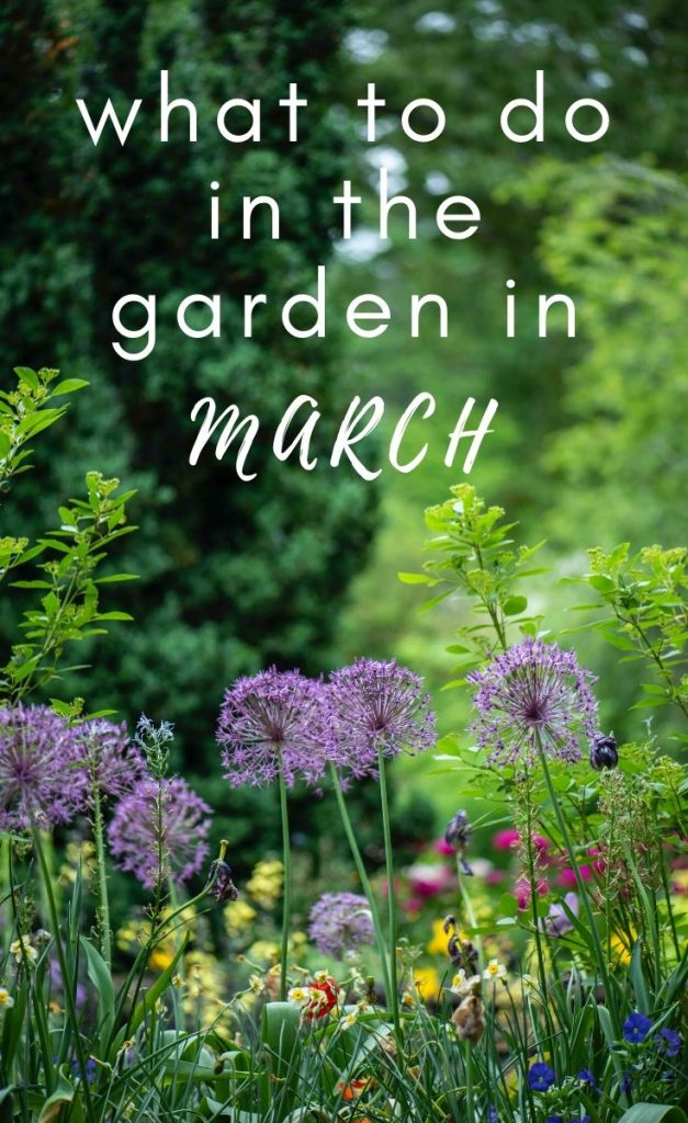 Ready to get planting in the garden? Check out these top picks for what to plant in March, including flowers, vegetables and bulbs.
