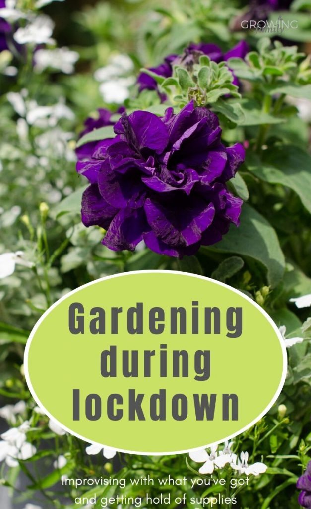 Gardening through lockdown: how to improvise with what you've already got, plus UK online gardening retailers that are still despatching orders.