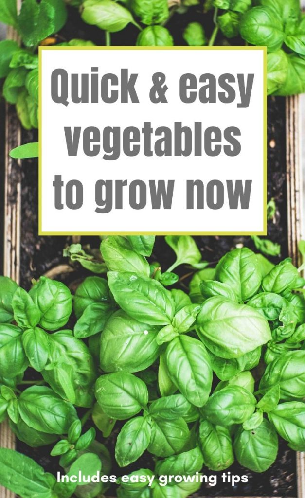 Want to grow your own vegetables, but not sure where to start? This vegetable gardening for beginners guide lists easy vegetables to grow, and how to do it.
