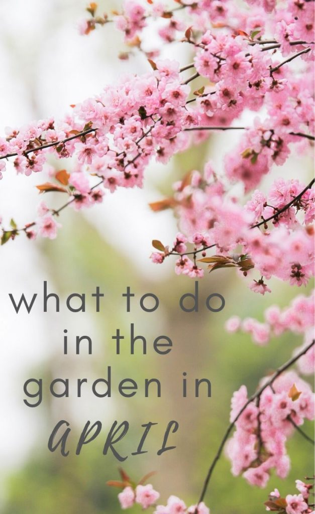 Ready to get planting in the garden? Check out these top picks for what to plant in April, including flowers, fruit, vegetables and bulbs.