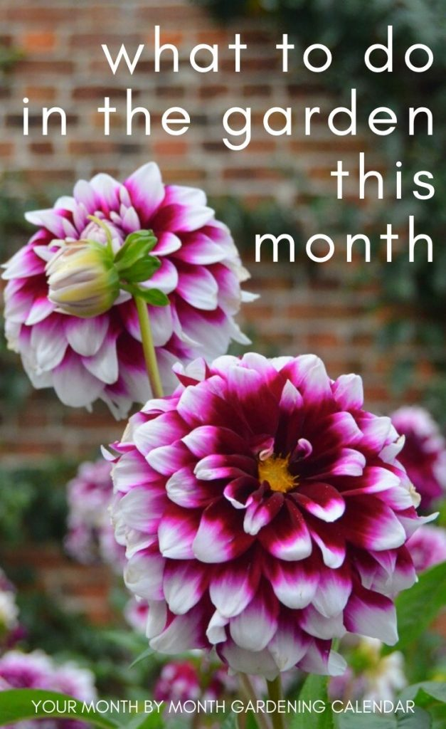 Ready to get planting in the garden? This one-stop gardening calendar covers what to plant each month, including flowers, fruit, vegetables and bulbs.