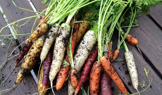 Quick and easy vegetables to grow now