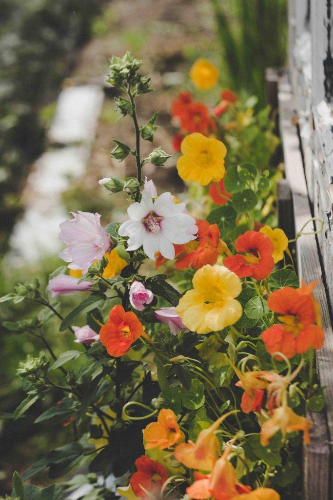 yellow orange and pink garden flowers