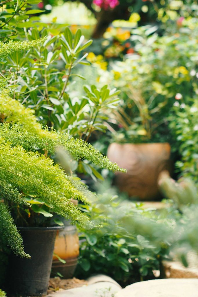 garden plants and containers