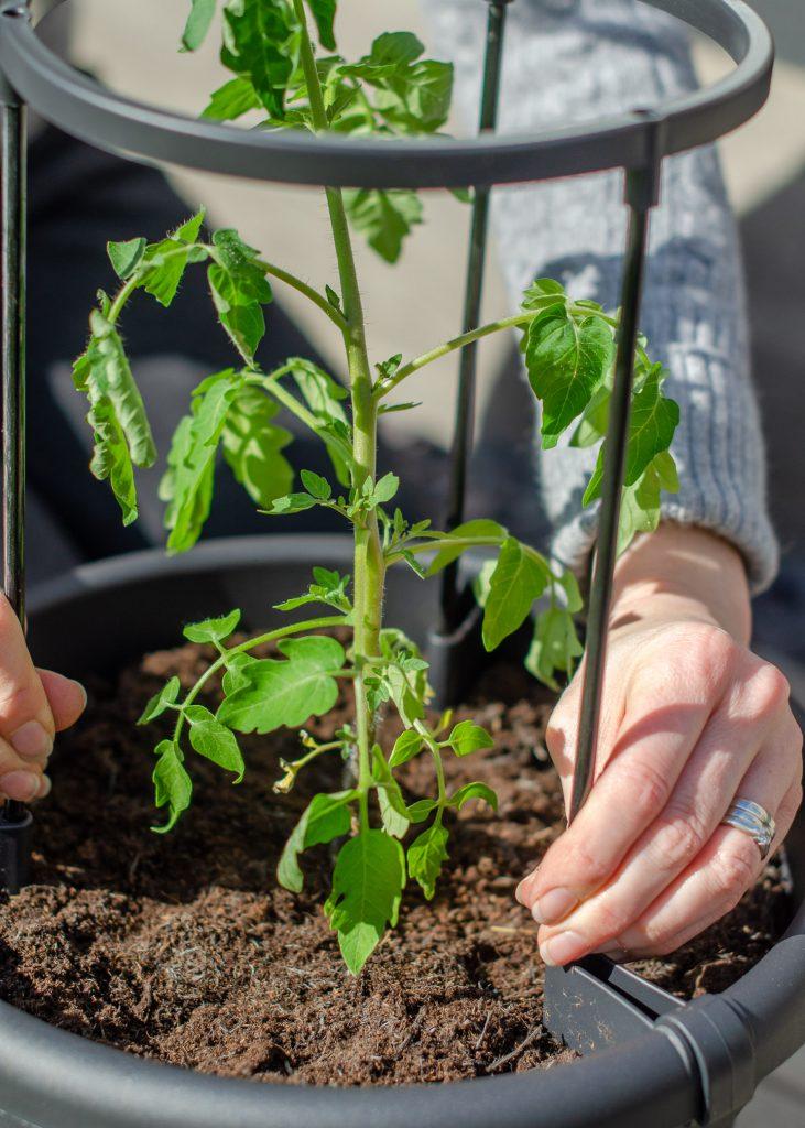 elho green basics tomato pot