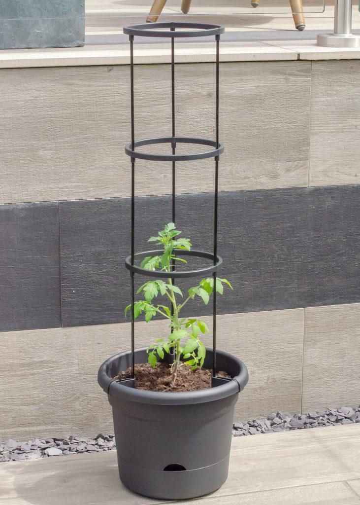elho green basics tomato pot with plant