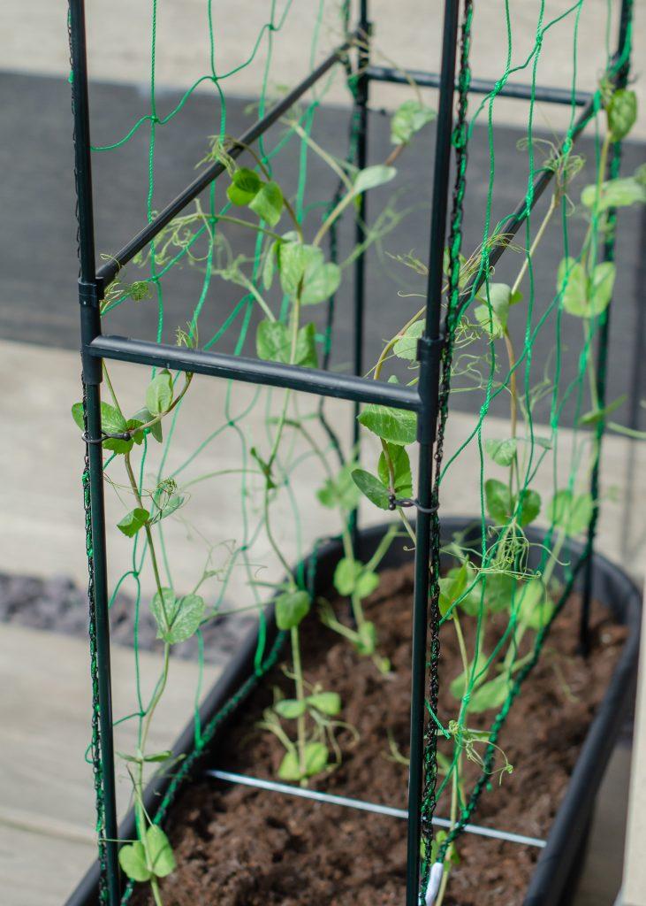 elho veggie wall planter