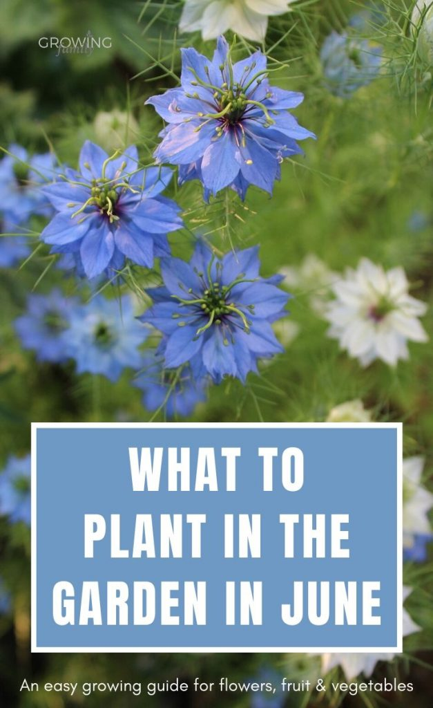 Ready to get planting in the garden? Check out these top picks for what to plant in June, including flowers, fruit and vegetables.