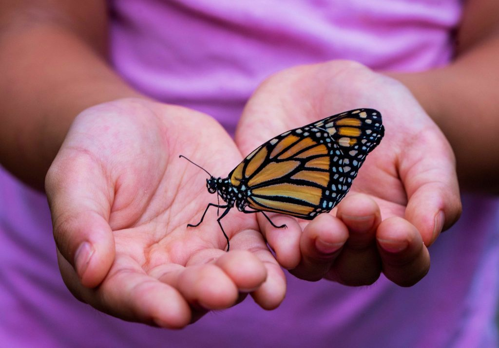 butterfly resting on open hands
