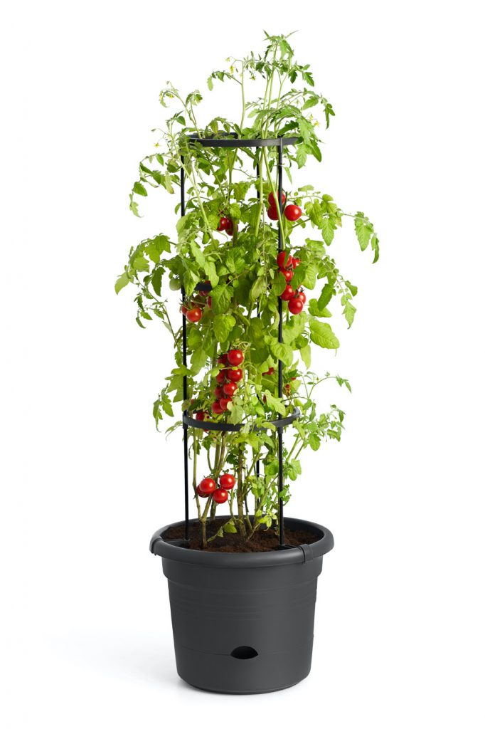 elho green basics tomato pot