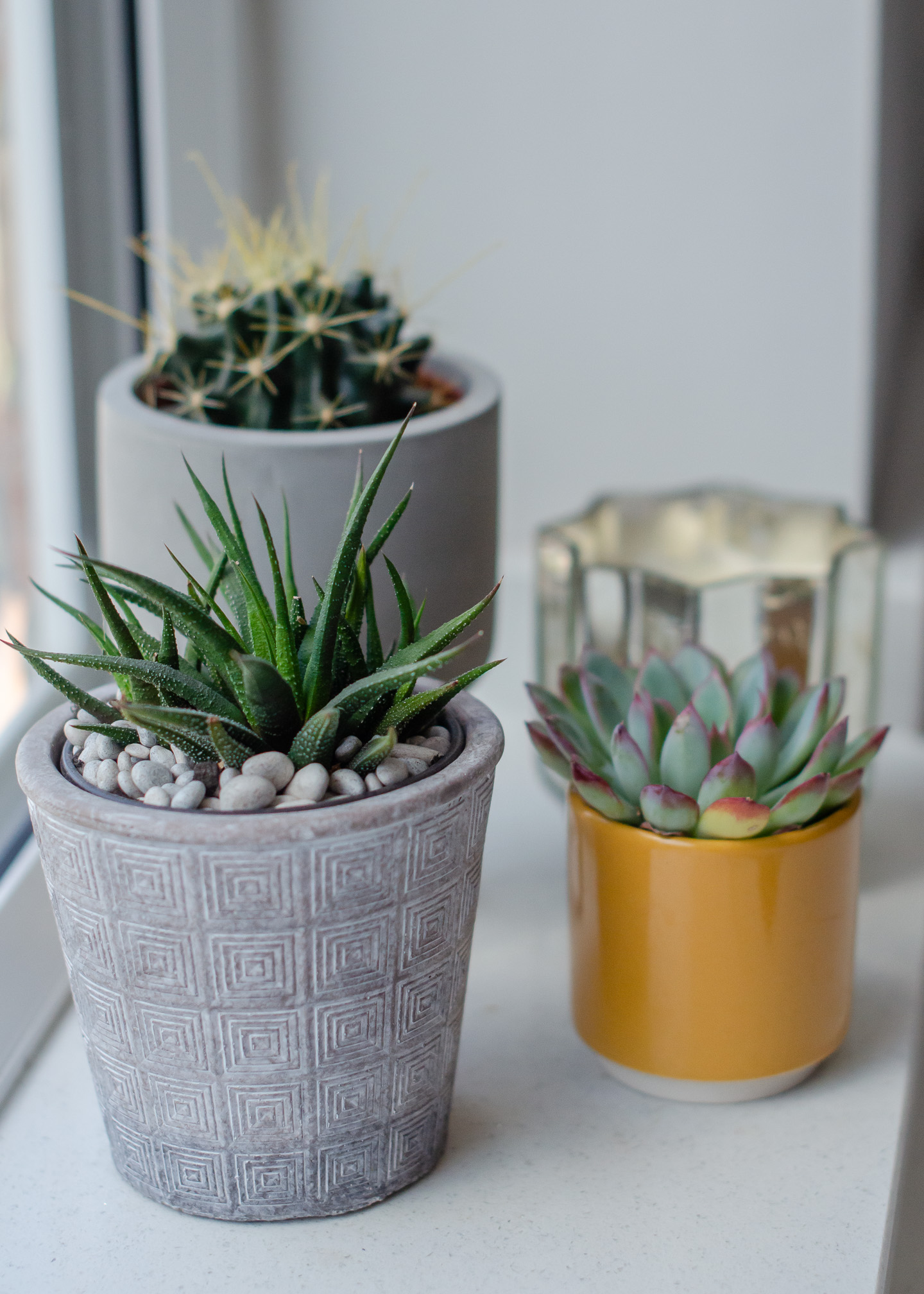 Indoor Plant Care Common Problems And How To Solve Them Growing Family