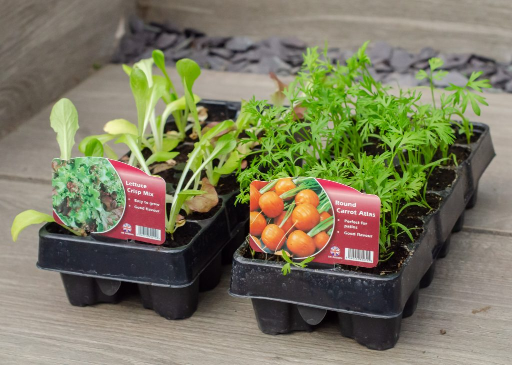 vegetable plants in plastic trays
