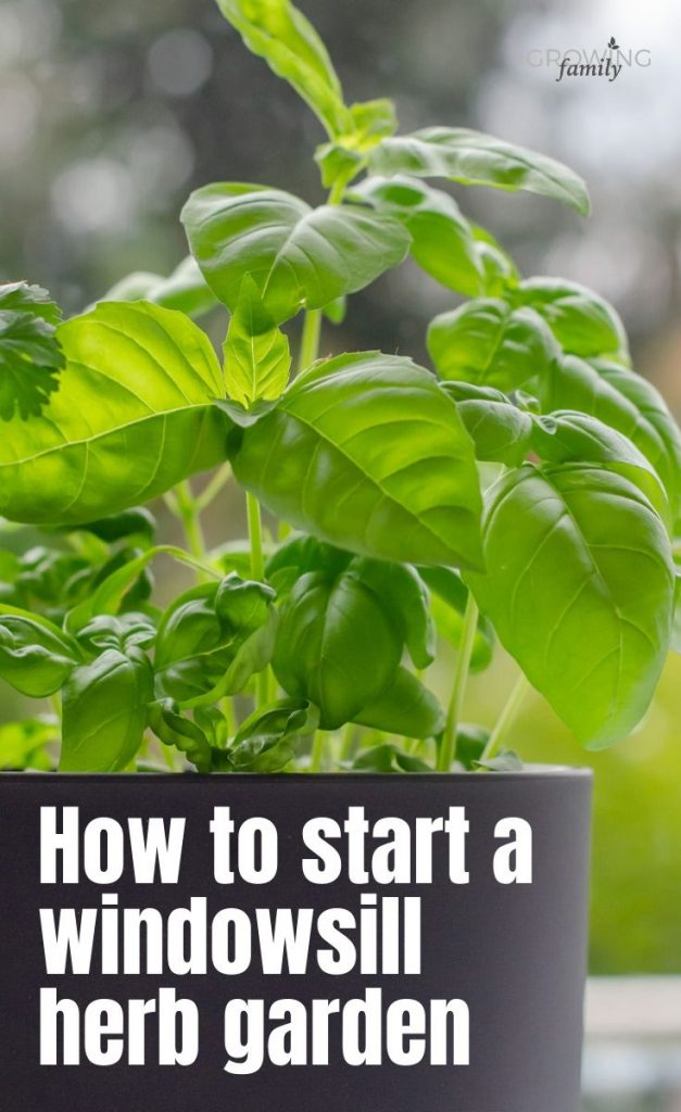 It's really easy to grow herbs from seed - you don't even need a garden to do it!  Here's how to start your own windowsill herb garden.