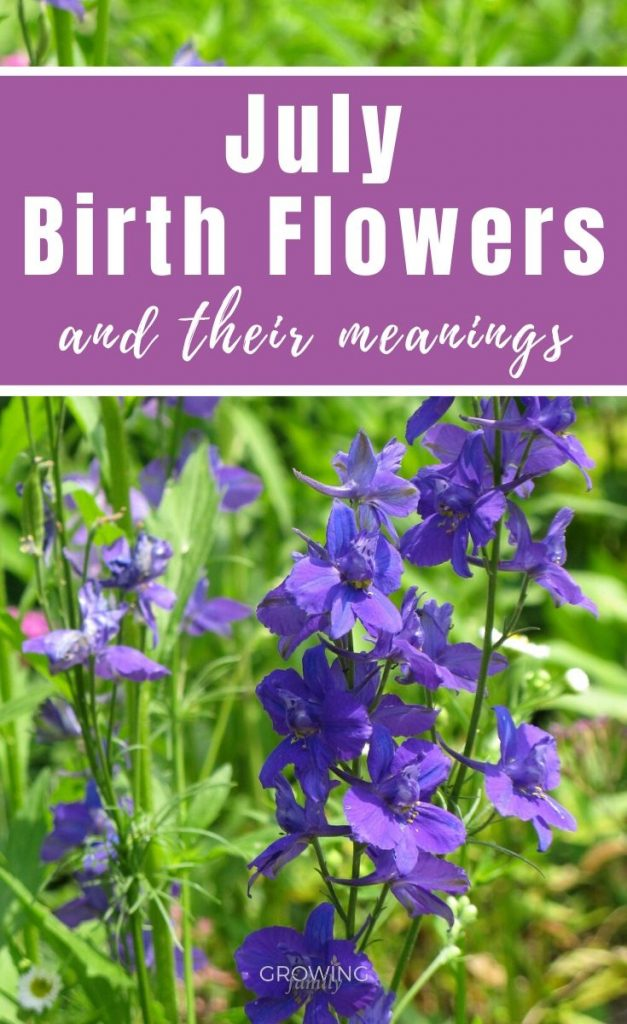 Every month has a birth flower, each with it's own special meaning. Here we take a look at the July birth flower - Larkspur and Water Lily.