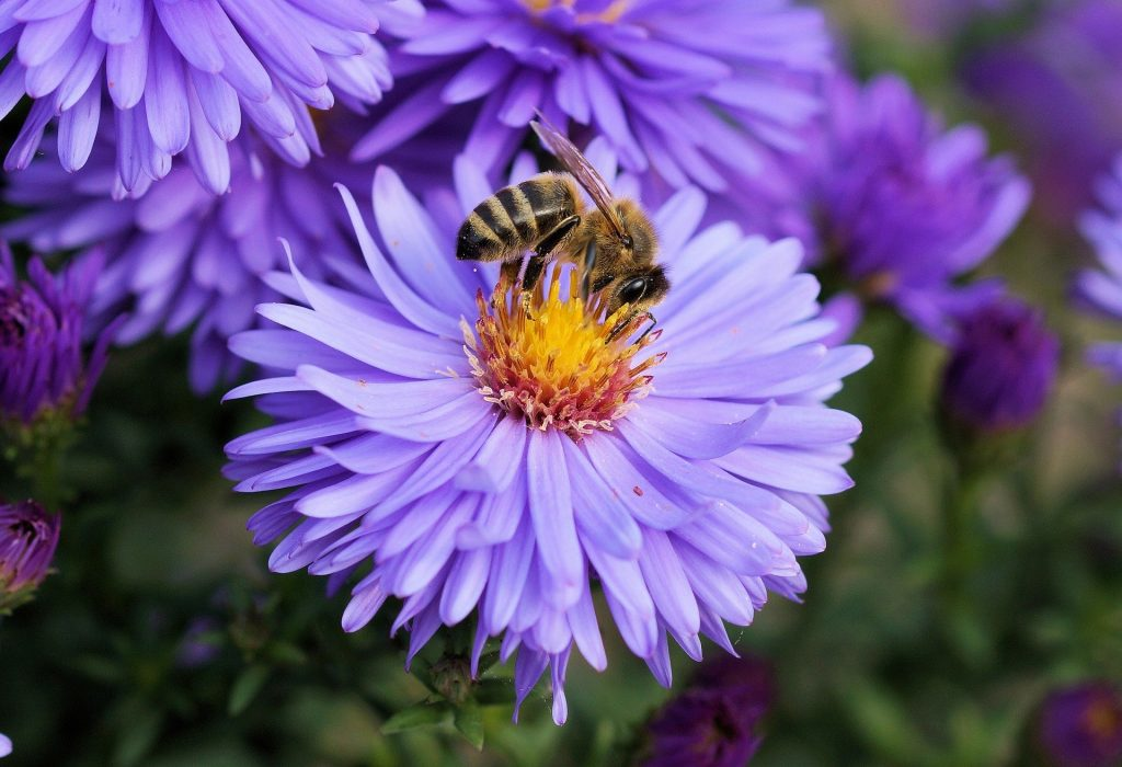 purple flowers for bees