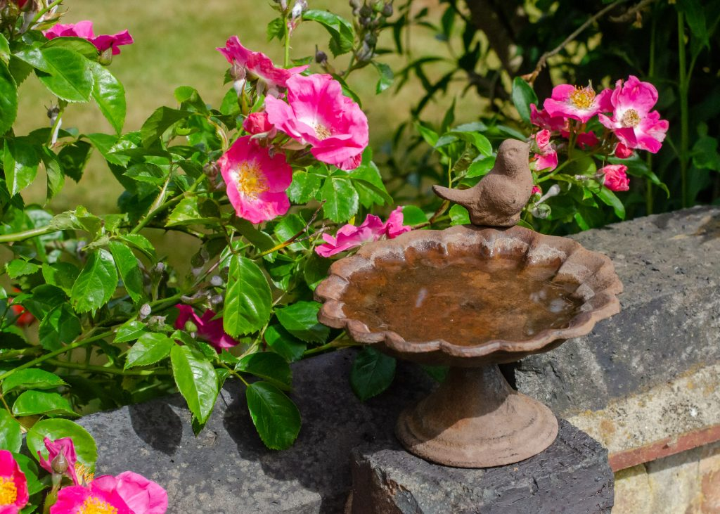 bird bath on garden wall