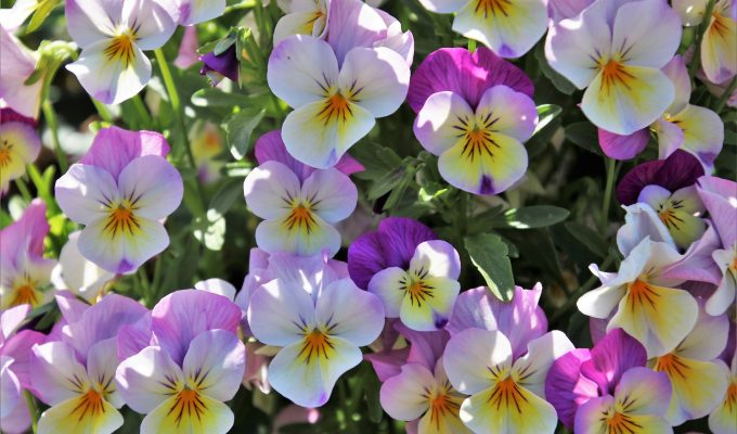 Gardening Calendar: What to Plant in August