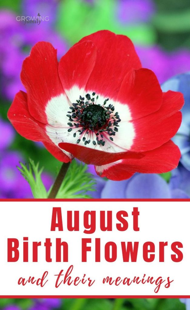Every month has a birth flower, each with it's own special meaning. Here we take a look at the August birth flower - Gladiolus and Poppy.