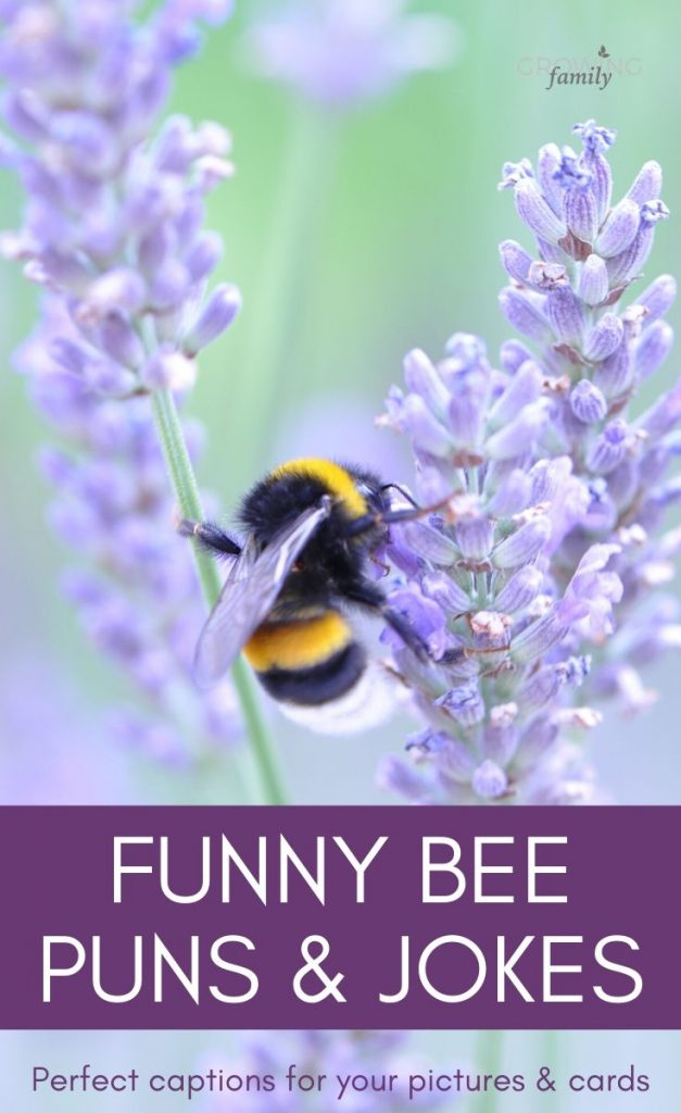 Make a beeline for these fun bee jokes and bee puns! Great for a giggle, and handy inspiration for your bee picture captions and greetings card messages.