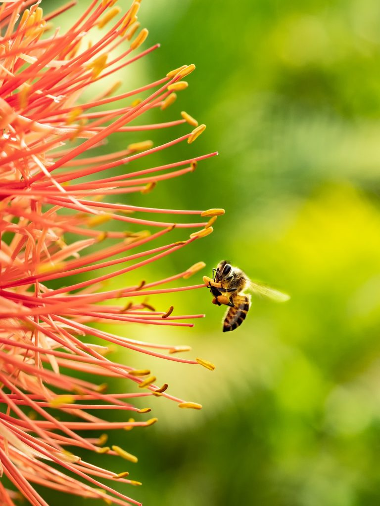 bee landing on orange flower