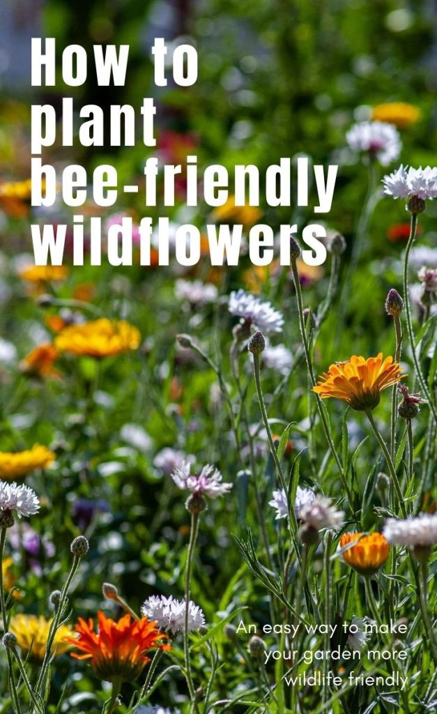 Bees need our help!  Support your local bee population with this easy step-by-step guide to planting wildflowers in the garden.