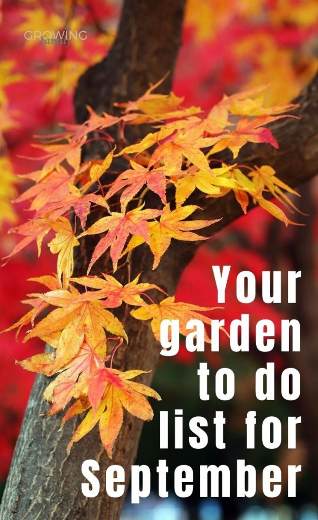 Not sure what to tackle in the garden this month? These quick and easy gardening jobs for September will help you keep the garden looking good.