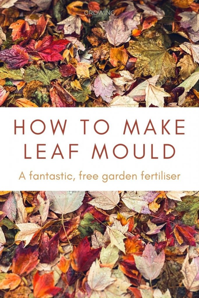 Easy instructions on how to make leaf mould - a fantastic, free garden soil conditioner. Plus tips on the best leaves for making leaf mould.